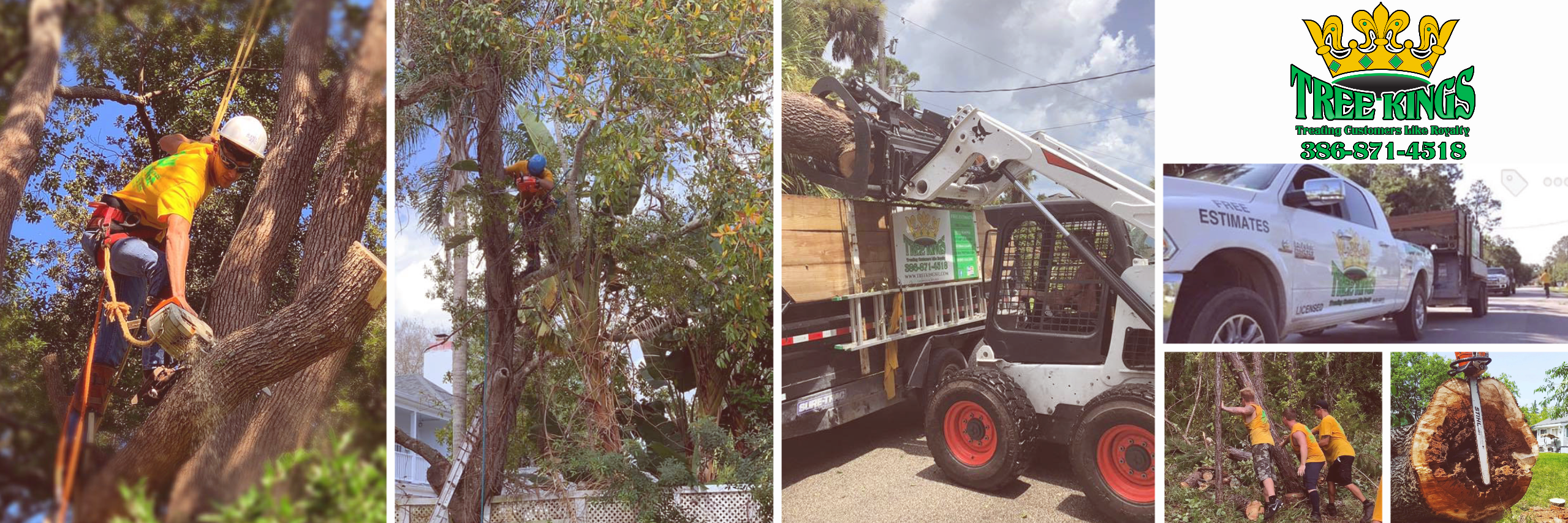 Tree Trimming & Removal Services
